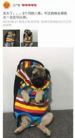 这到底是婴儿背带还是狗狗衣服?