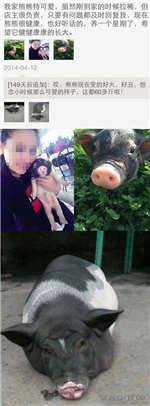 买到60斤的猪猪宠物