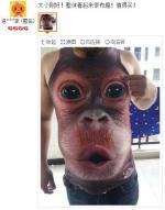 猩猩T恤的3D效果好明显